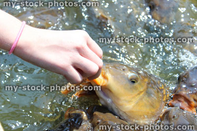 кормить карпа на рыбалке