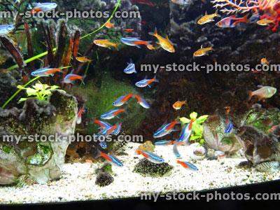 Freshwater Tropical Aquarium Fish Tank
